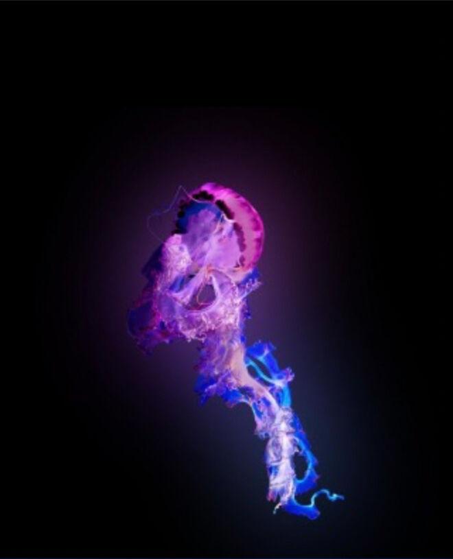 Lanstan - Glow